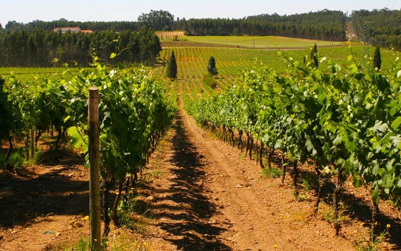 caves messias vinhos de portugal wines bairrada mealhada quinta valdoeiro